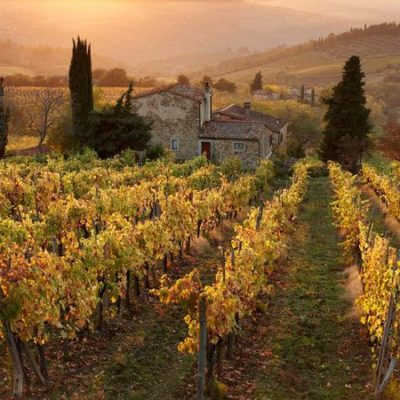 Italian Vineyards – Some Of Europe's Favourites