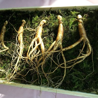 Frequently Asked Questions about Ginseng