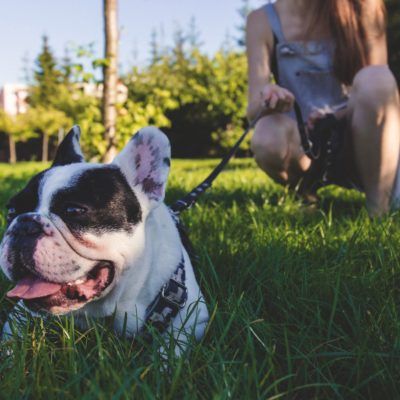 Thinking of Getting a Dog? Here's Everything You Need to Know