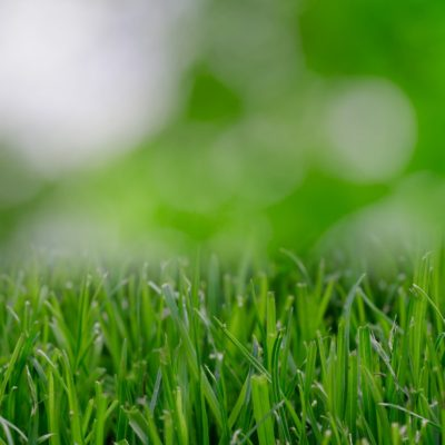 Why You Should Use A Product Like EZ FLO Fertilizer on Your Lawn